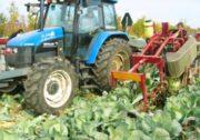 Комбайн для збору капусти Univerco Cabbage Harvester